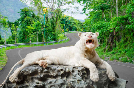 canines: The white tiger growls. big canines. On nature background. Stock Photo