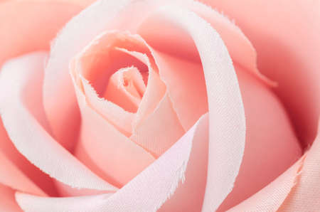 fineart: Center on pink rose. Stock Photo