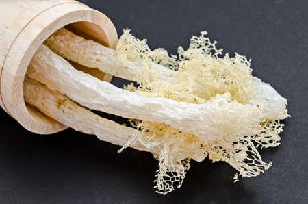 phallus: Dried Bamboo mushroom on black background. Stock Photo