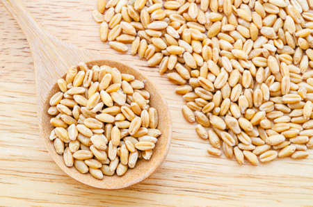 wheat kernel: wheat kernels against in wood spoon on wood background Stock Photo