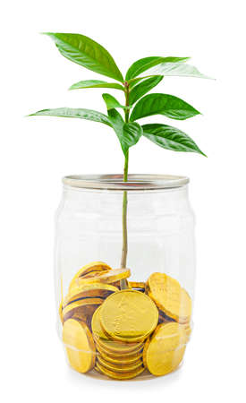 Business growth concept. Plant and Gold coin in bottle isolated on white background, Save clipping path. Stock Photo