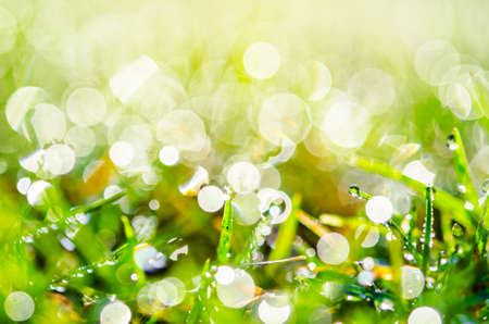 tight focus: Grass closeup with fine water drops spraying down and creating a beautiful light effect background, shallow focus Stock Photo