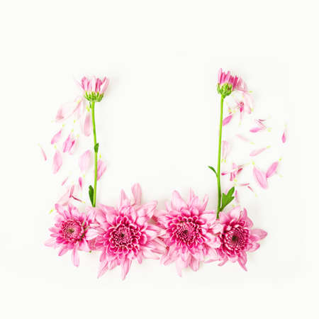 natue: Frame of  pink chrysanthemum flower isolated on white background.
