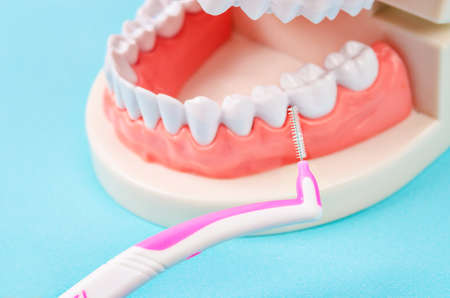Interdental Brushes with denture in dental lab. Stock Photo