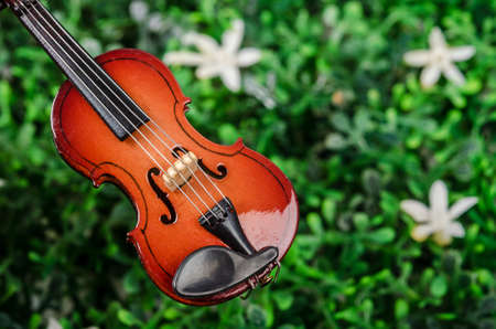 Violin on green grass. Music concept. Stock Photo
