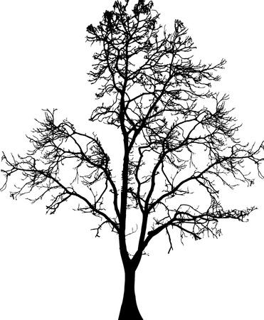 arboles blanco y negro: ilustración vectorial de la silueta del árbol