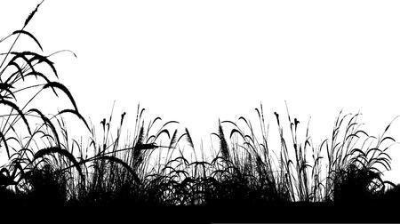 illustration vectorielle de fond silhouette herbe
