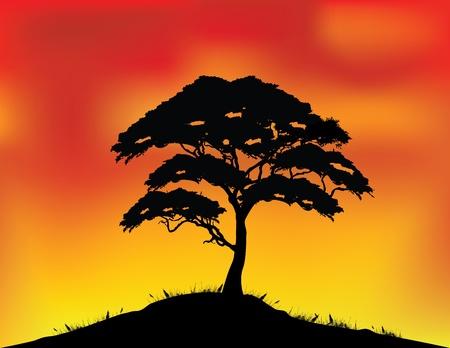 acacia: vector illustration of Africa landscape background