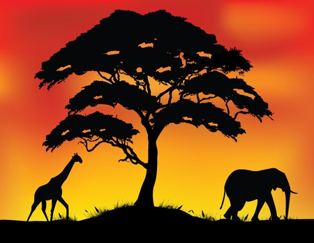 vector illustration of safari background  Illustration