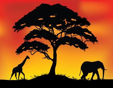 acacia: vector illustration of safari background  Illustration