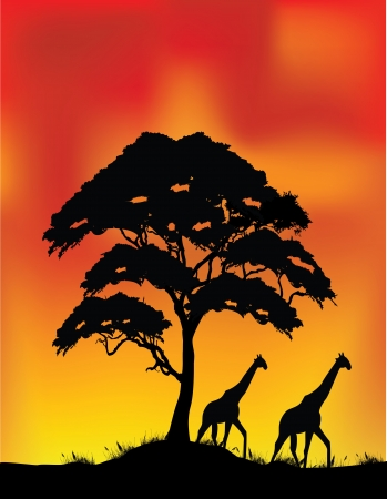 safari animal: vector illustration of safari background  Illustration