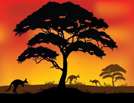 kangaroo mother: vector illustration of Safari Background