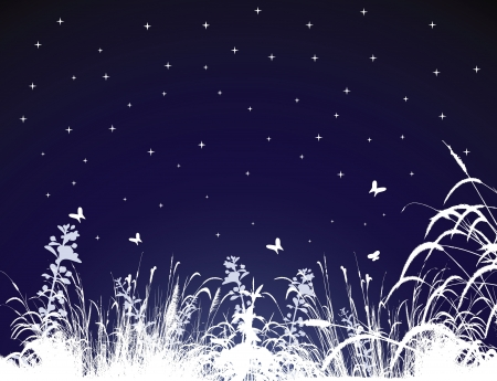 Vector Illustration of Summer Night  Vector