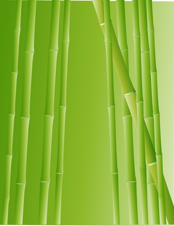 Vector Illustration Of Bamboo Forest Stock Vector - 14805720