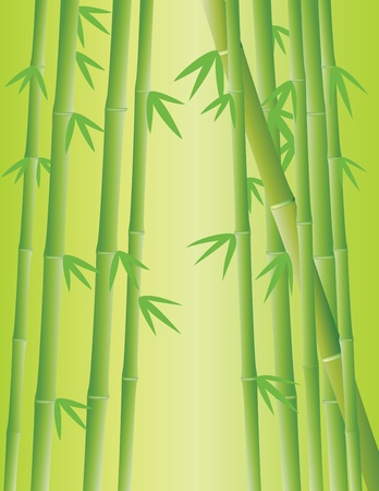 Vector Illustration Of Bamboo Forest Illustration