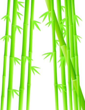 Vector Illustration Of Bamboo Forest Illustration