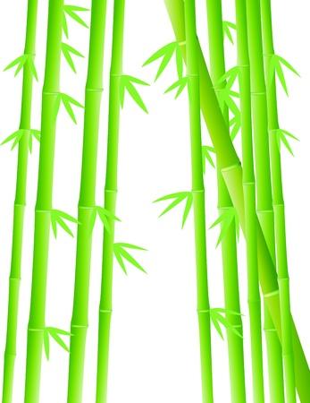 feng shui: Vector Illustration Of Bamboo Forest Illustration