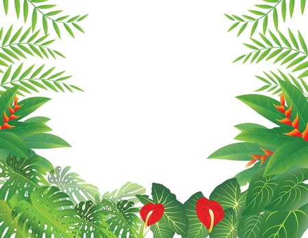natural vegetation: vector illustration of Tropical Forest Background