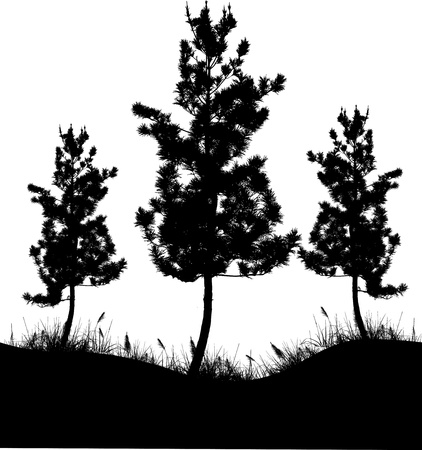 pine tree silhouette: Vector Illustration Of Tree Silhouette