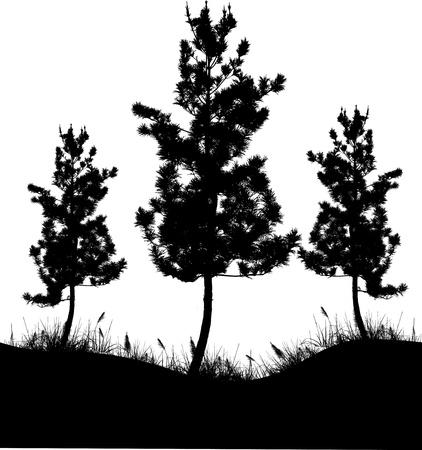 branch to grow up: Vector Ilustraci�n De La Silueta del �rbol
