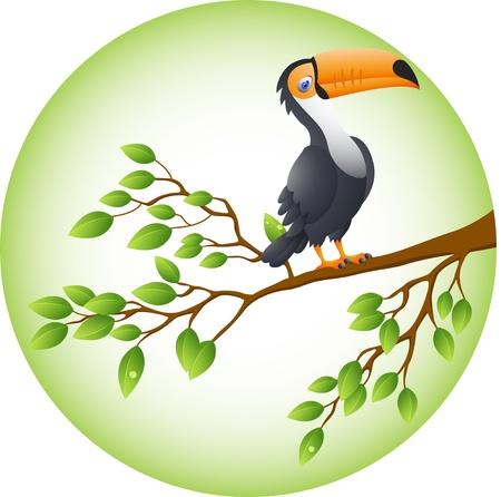 Vector Illustration Of Toucan Bird Vector