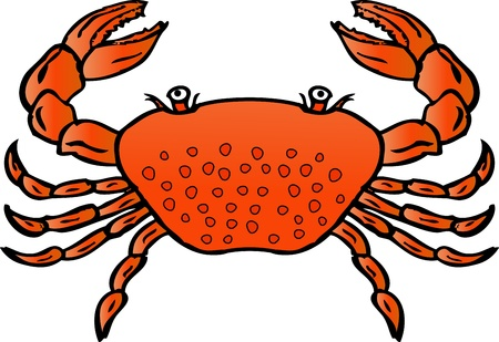 Vector Illustration Of Crab Cartoon Illustration