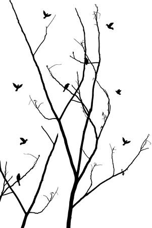 bough: illustration of branches with birds Illustration