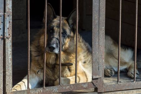 service dog german shepherd in aviary Banco de Imagens