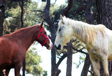 whitehorse: Love horses Stock Photo
