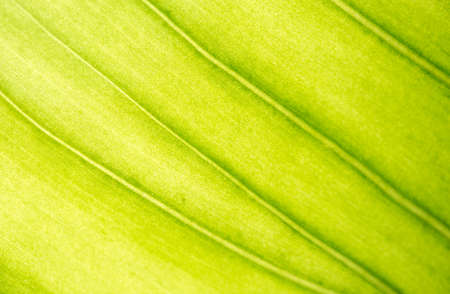 Green leaves background. Green leaf texture Stacked Leaves Rough Surface Stock Photo
