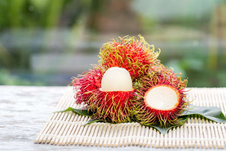 rambutan fruit on trunk in the garden,Ripe and green rambutan growing in garden/colorful red fruit at tree/fruit trade products/gardening of rambutan