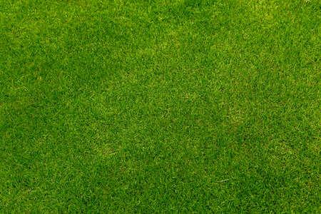 Green grass soccer field background beautiful pattern of fresh green grass for football sport, football field, soccer field, team sport texture