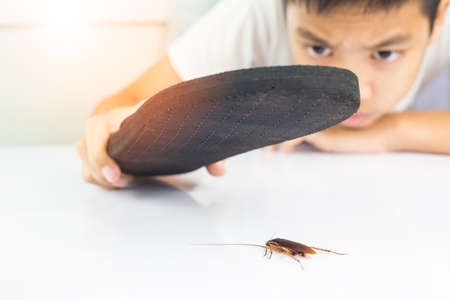 The boy was about to use his hands to get rid of cockroaches from the table in the white kitchen.  This can be used as a business card background and can be used as an advertising image. Stock Photo