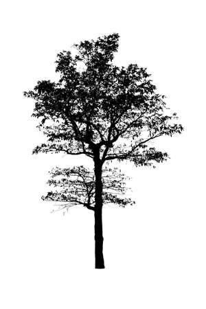 Siluetas de árboles negros aislados sobre fondo blanco, Foto de archivo