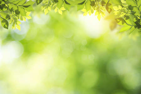 Fresh and green leaves green bokeh on nature abstract blur background green bokeh from tree.Mock up for display.  montage of product,Banner or header for advertise on social media,Spring and Summer. Standard-Bild