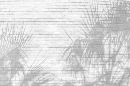 Tropical palm leaves shadows on White brick wall texture background. White cement wall with a shade from palm trees