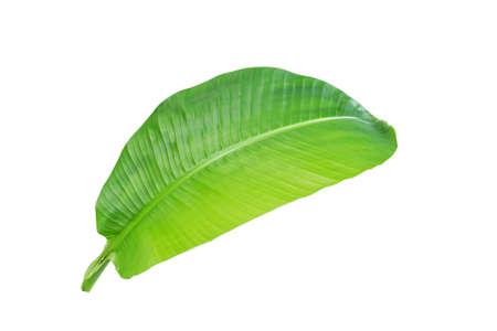 texture de feuille de bananier tropicale dans le jardin, feuille verte abstraite, grande nature de feuillage de palmier. feuille de bananier isolé sur fond blanc,
