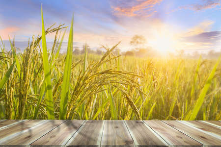 Brown wooden table board empty on Beautiful Organic paddy-field. Rice field and sky background at sunset time with sun rays.