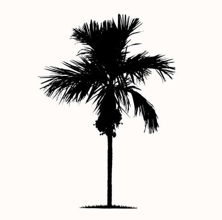 Palm trees in silhouettes. Create many more trees with leaves. Foto de archivo - 134717065