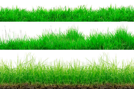 Green Grass Border isolated on white background.The collection of grass. (Manila Grass)The grass is native to Thailand is very popular in the front yard. Foto de archivo - 135862794