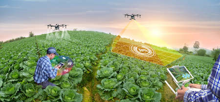 Panorama agriculture drone fly to sprayed fertilizer on Cabbage field. smart farmer use drone for various fields like research analysis, terrain scanning technology, smart technology concept.
