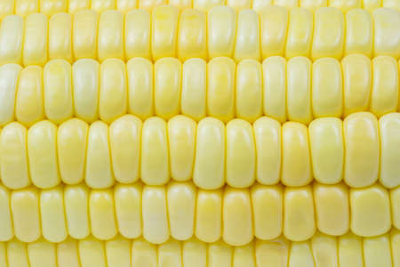 Close-up seeds of sweet corn in a row. A drop of water on the yellow seed. Abstract background and texture of freshness corn. Top view close up photo image of yellow sweetcorn grain.
