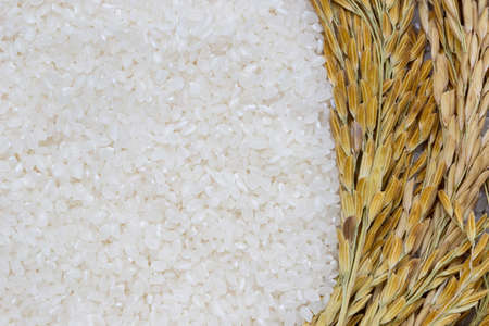 Rice used for sushi. Short Grain Sushi Koshihikari Rice. High resolution.  rice grains healthy food on sack background Archivio Fotografico