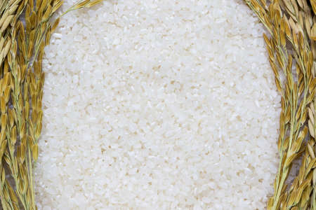 Rice used for sushi. Short Grain Sushi Koshihikari Rice. High resolution.  rice grains healthy food on white background