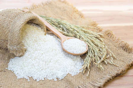 Rice used for sushi. Short Grain Sushi Koshihikari Rice. High resolution.  rice grains healthy food on sack background 免版税图像