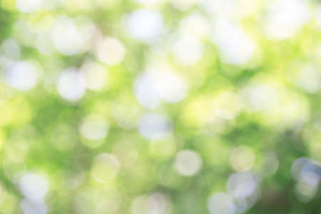 Green bokeh on nature abstract blur background green bokeh from tree.Mock up for display.  montage of product,Banner or header for advertise on social media,Spring and Summer.
