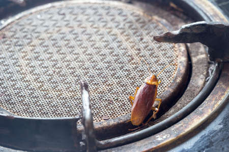 The problem in the house because of cockroaches living in the kitchen.Cockroach eating whole wheat bread.Cockroaches are carriers of the disease.kitchen.Cockroaches are carriers of the disease.