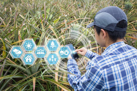 Innovation technology for smart farm system, Agriculture management, Hand holding smartphone with smart technology concept. asian male farmer working in pineapple farm To collect data to study.