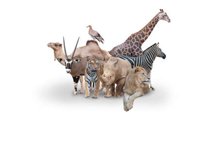 Large group of wild zoo animals together on horizontal web banner with room for text in white space 版權商用圖片