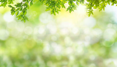 Fresh and green leaves green bokeh on nature abstract blur background green bokeh from tree.Mock up for display.  montage of product,Banner or header for advertise on social media,Spring and Summer. 版權商用圖片